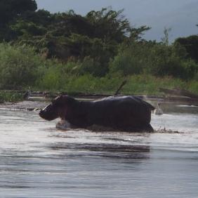 Hippo Ethiopia