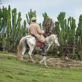 Oromo Horserider