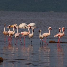 Flamingo Shala